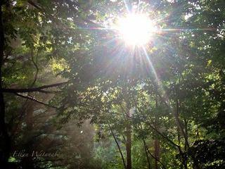 森の光2.JPG